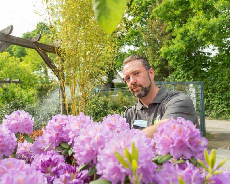 Andreas Irrling kümmert sich um den Riesen Rhodedendron im Eingangsbereich des Gartenmarktes. Der Gartenmarkt besteht inzwischen 55 Jahre und soll nun erneut erweitert werden. (© Foto: René Matschkowiak)