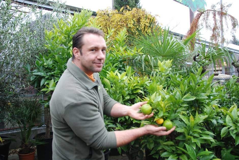 Orangenbaum oder doch Palmen?: Gärtnerei-Chef Andreas Irrling stellt einige seiner Pflanzen für den Uni-Ball. © Foto: MOZ/Julia Lehmann