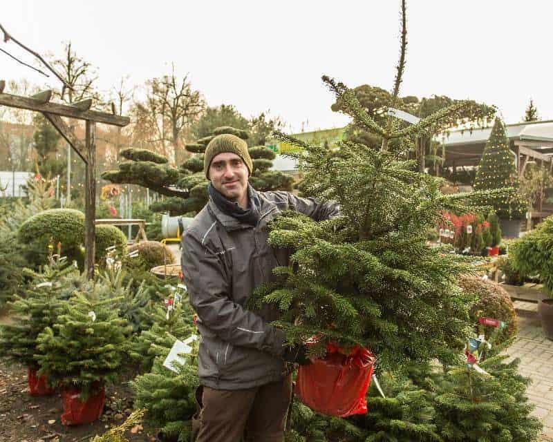 Baumschulberater Uwe Töpper von der Gärtnerei und Baumschule Irrling zeigt einen Weihnachtsbaum im Topf, der aus einer Baumschule kommt. © Foto: René Matschkowiak